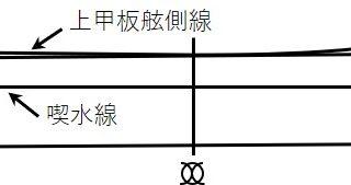 三級海技士(航海) 運用 筆記試験問題 船体構造(4)